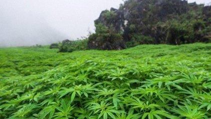 ¿Se avecina la legalización de la marihuana en México?