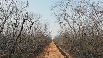 Evo Morales y el agronegocio están detrás de los incendios en la Amazonia boliviana