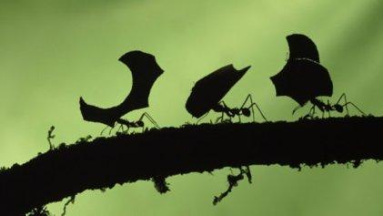 Darwin, el organismo y su ambiente