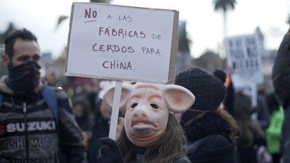 Insólito: buscan ligar protestas contra megagranjas a la disputa entre China y EE. UU.