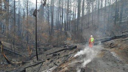 Sobre los incendios en el sur y el extractivismo como modelo