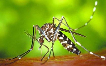 Imparable: ya son más de 25.000 los casos de dengue en el país