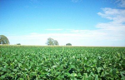 Pronostican nueva cosecha récord en 2017: 121 millones de toneladas