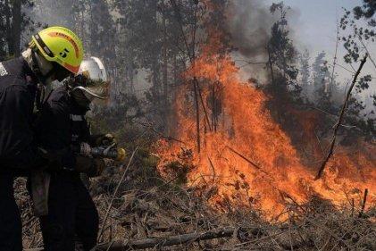 Una respuesta ante el incendio neoliberal de las forestales